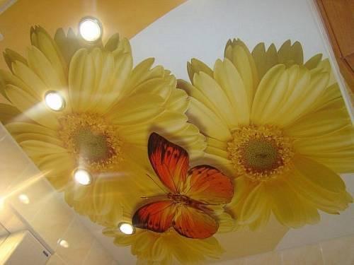 Французский потолок с фотопечатью (цветы и бабочка)