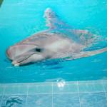 Потолок с дельфином в ванной