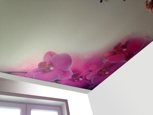 Изображение орхидеи на потолке